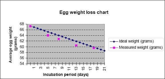 egg weight loss chart during incubator