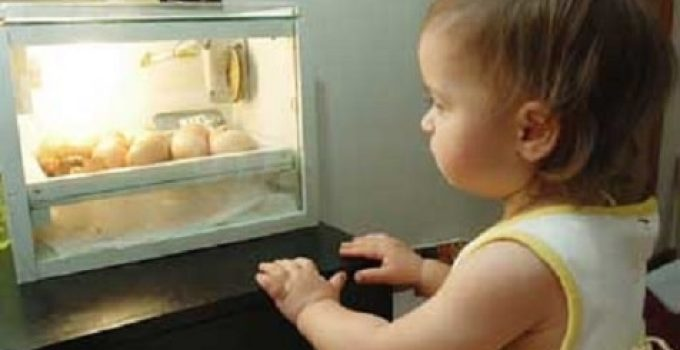How to Choose Best Chicken Egg Incubator