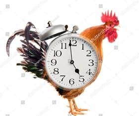 Rooster Mornig Alarm